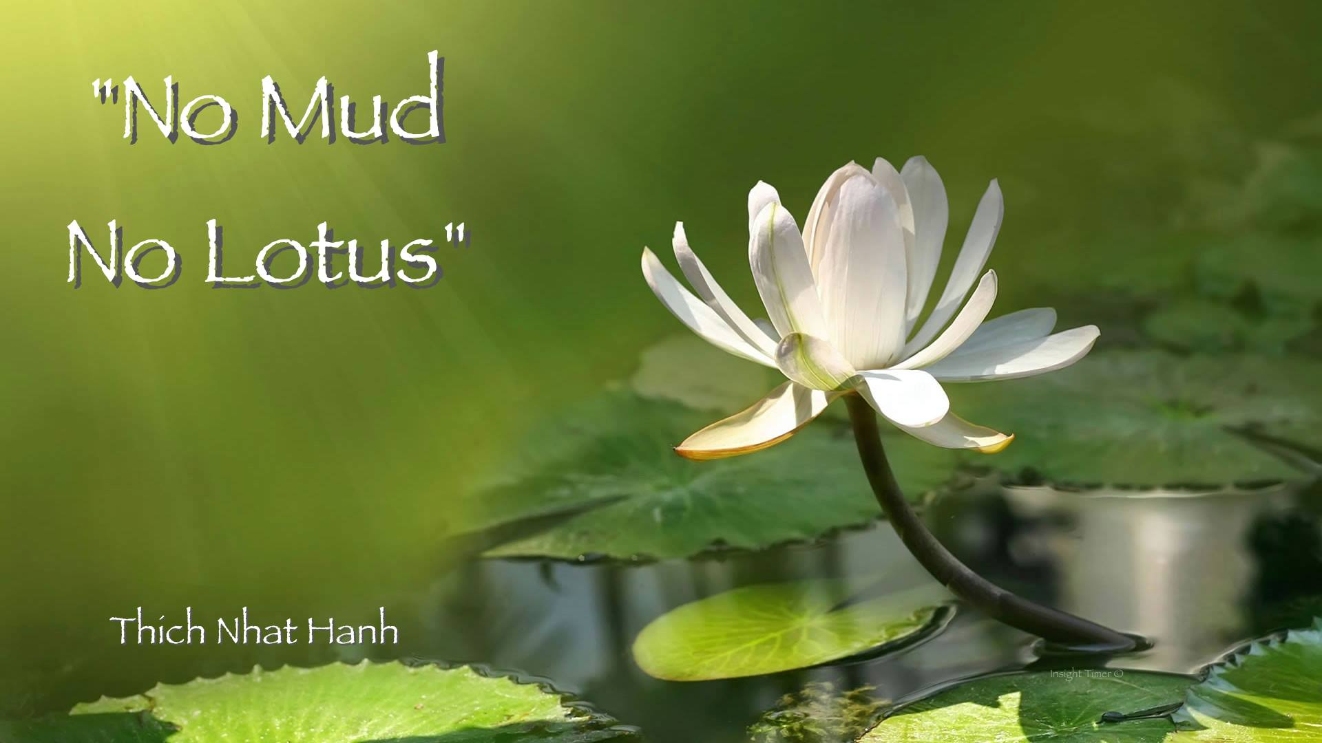Lotus Flower Quotes Mud Quotes